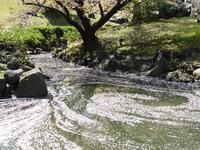 静かに花見を楽しみたいなら浜松町の芝離宮がお勧め♪増上寺の桜と東京タワーもね♪ - ルソイの半バックパッカー旅