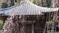 徳島明王寺 - belakangan ini