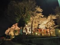 千手院「深淵のしだれ桜!」 - 浦佐地域づくり協議会のブログ