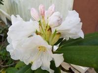 4月の庭 - 巣箱日記