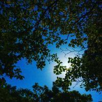 """p868 """" 初夏 """" 松の川緑道-自由が丘 2018年4月20日 - 侘び寂び"""