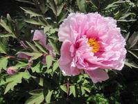 留守の間に庭は - 花の自由旋律