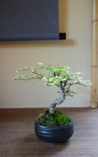 新緑の盆栽を楽しむ - g's style day by day ー京都嵐山から、季節を楽しむ日々をお届けしますー