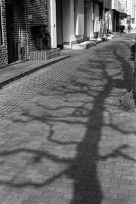 忍び寄る触手に身がすくむ店頭の自転車 - Film&Gasoline