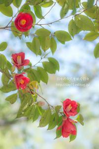椿 - 日々の欠片を紡ぐ日々