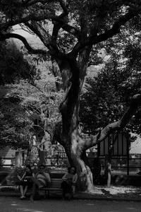 東京スナップショット - はーとらんど写真感
