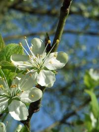 春は本当に忙しい - ベルギー 田舎季記