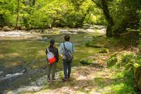 菊池渓谷の新緑が綺麗ですよ - 菊池渓谷の風景