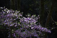 緑化センター4月の花たち - (=^・^=)の部屋 写真館