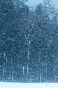 猛吹雪の日 - 空ヤ畑ノコトバカリ