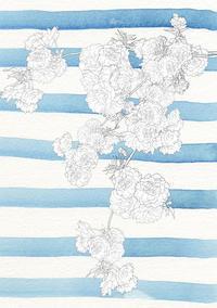 八重桜のブラシ - 山田南平Blog
