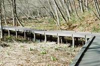 平岡公園の水芭蕉とエゾ立金花 - 照片画廊