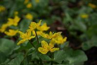 黄 雨 - フォトな日々