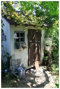 モッコウバラが満開です! - natu     * 素敵なナチュラルガーデンから~*     福岡で庭造り、外構工事(エクステリア)をしてます