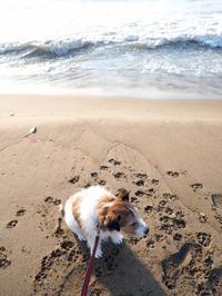 海散歩。 - pineのあしおと