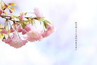 ご近所のsakuraLast2018/04/13 - 虹のむこうには何が見える?