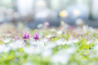 春爛漫 - 笑顔同封