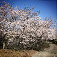 春 - *tumugi*
