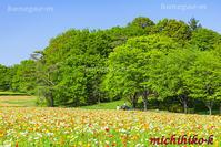 ポピー畑と新緑の木立国営武蔵丘陵森林公園 - 風景写真家 鐘ヶ江道彦のフォトブログ
