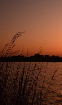 夕刻の江戸川河川敷 - そよ風のおもむくままに