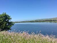 カリフォルニアで6.5km - bluecheese in Hakuba & NZ:白馬とNZでの暮らし