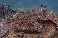 18.4.21 賑やかに。 - 沖縄本島 島んちゅガイドの『ダイビング日誌』