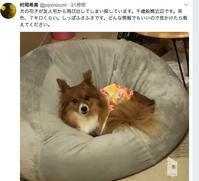 花子ちゃん捜索中(迷子犬) - もるとゆらじお