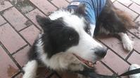 犬の血液検査②訂正と追加 - はばたけ MY SOUL