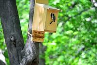 シジュウカラが巣箱で・・・八王子 - 浅川野鳥散歩