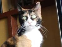 三毛猫ひかちゃん -69- - 殿様の試写室