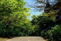 新緑と石楠花(神戸市立森林植物園) - 案山子の写真紀行