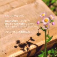 ハルジオン - m*photopoem