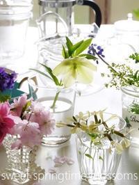 急ぎ足の春 on the table - serendipity blog