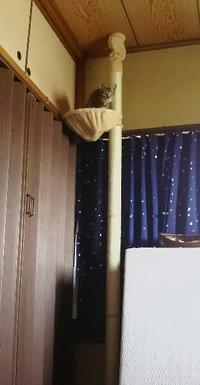 猫タワーを設置しました - 水の色時間