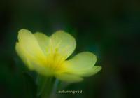 久しぶりにSD15 - autumngood digital photo blog