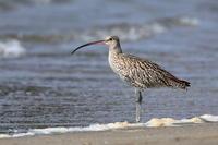 美しい湾曲 - 綺麗な野鳥たち