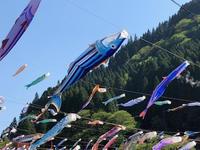 杖立温泉 鯉のぼり祭り - 今日は何処まで