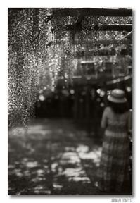 稲植月日記(15)... Leica MM(Typ 246)修行┐(´д`)┌ - M8, M9 & R-D1  for Something I love...323