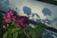 リシュリューとコーネリア - お庭のおと