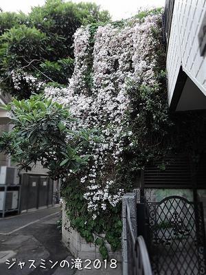 花の妖精 - サモエド クローカのお気楽日記