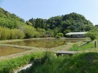 花、葉、、タネ。そして昆虫たち - 千葉県いすみ環境と文化のさとセンター