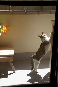 最近の猫事情47 - 鳥会えず猫生活