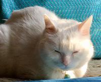 朝日の中で - 赤煉瓦洋館の雅茶子