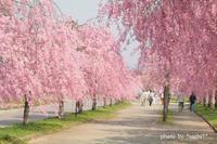 桜@2018 - Precious Days ~ふたりで~Ⅱ