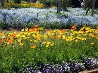 【大船フラワーセンター】新緑と花壇の花々【リニューアルオープン】 - お散歩アルバム・・冬本番