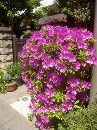 五月晴れのオオムラサキと季節の花々 - 活花生活(2)