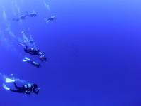 4月22日 ジンベエザメ whale shark - YDSブログ