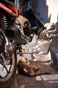 フェズのスーク(市場)の猫たち〜モロッコは猫だらけです^^ - ぐりーんらいふ