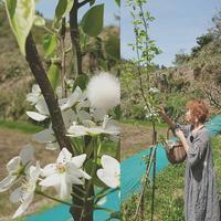 梨のお花に受粉♪  働きもののリネン服♪ - MIFUMI*  Petite Couture Rie
