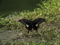 蝶 - 日々カメラと共に